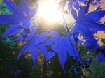 Photo by John K ~ Let there be light (inspired by the photography of Michael Leacher)