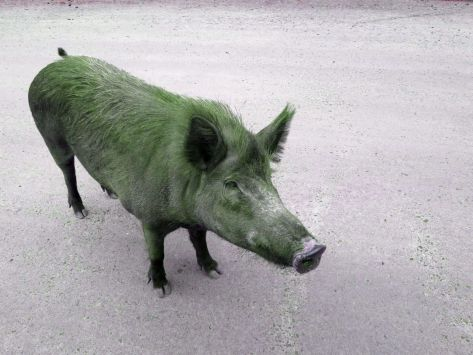 Photo by John K ~ Pig in a poke